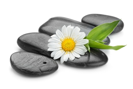 spa stones: zen basalt stones and daisy isolated on white