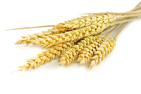 wheat on the white background photo