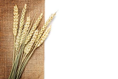wheat on the white background photo