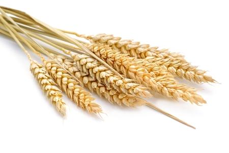 白い背景の上の小麦.