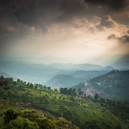 agriculture landscape: Tea plantations in state Kerala, India Stock Photo