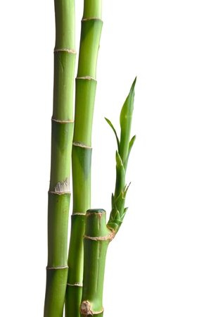 bamboo leaves isolated on white 写真素材