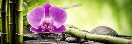 orchidee: pietre di basalto zen, orchidee e bambù Archivio Fotografico