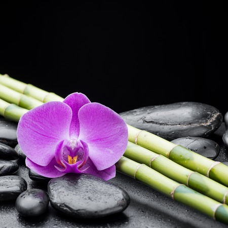 zen basalt stones ,orchid and bamboo photo