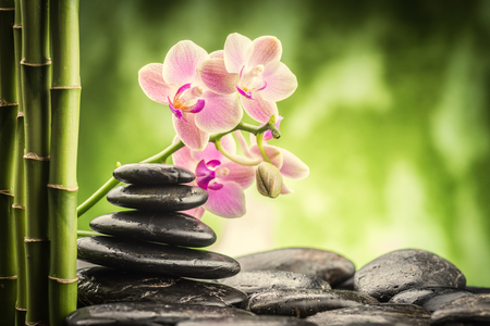 bamboo leaves: zen basalt stones ,orchid and bamboo
