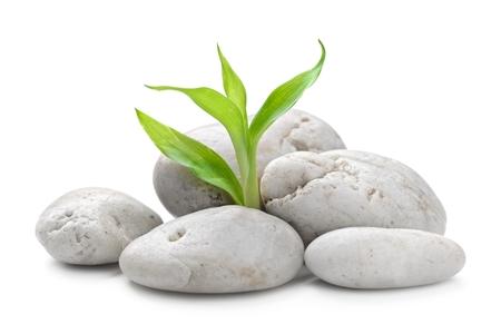 zen basalt stenen en bamboe op wit wordt geïsoleerd