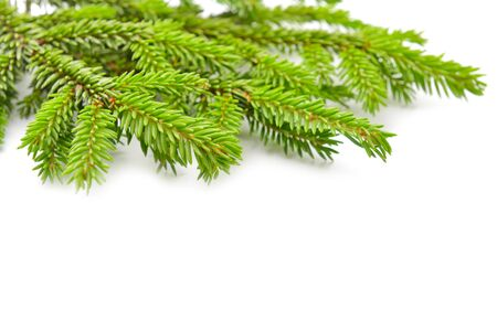 fir tree: fir tree isolated on white Stock Photo