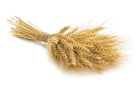 raw gold: wheat on the white background.. Stock Photo