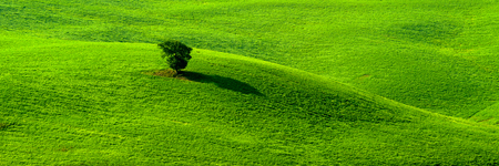 single tree in the grass field Stock Photo