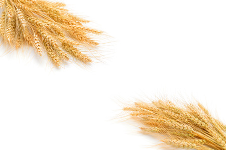 wheat on the white background.. Archivio Fotografico