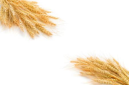 cosecha de trigo: trigo en el fondo blanco ..