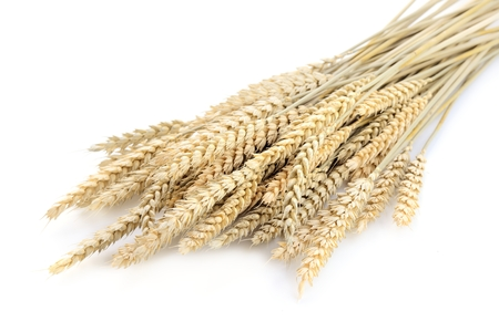golden wheat isolated on the white background.. Stock Photo