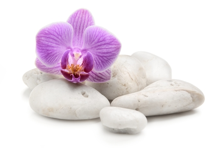 white stones: orchid with zen basalt stones on the white background