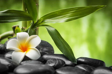 frangipani and bamboo on the zen basalt stones