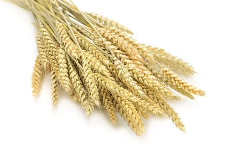 wheat on the white background.. Stock Photo