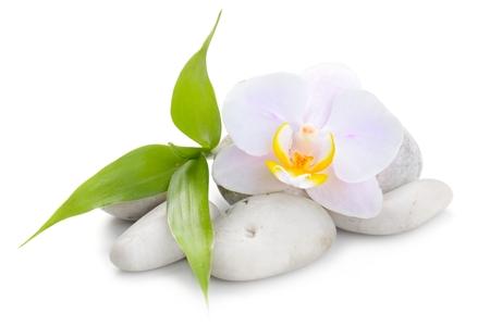 禅玄武岩石、蘭と竹白で隔離 写真素材