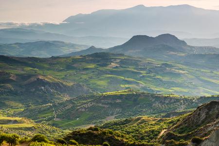 クレタ島、ギリシャのオリーブ農園