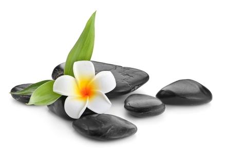 frangipani and bamboo on the zen basalt stones isolated on white background Stock fotó