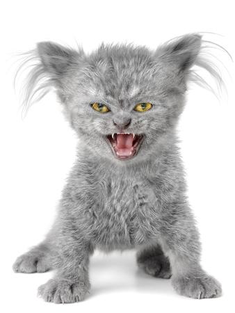 Evil kitten on the wite background