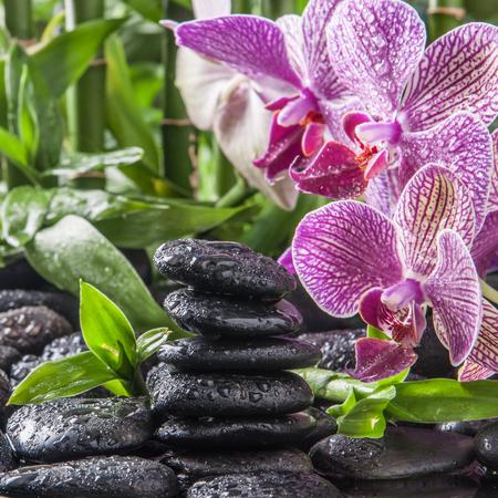 禅玄武岩石、蘭と竹 写真素材