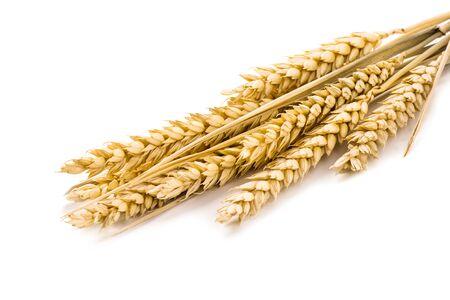 Weizen auf dem weißen Hintergrund.. Standard-Bild