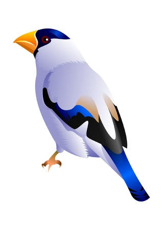 yellow beaked blue headed white bird Vector