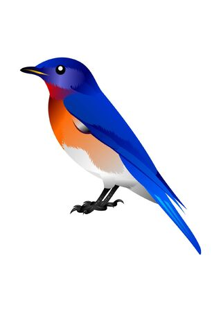 blue, orange and white birdy Vector