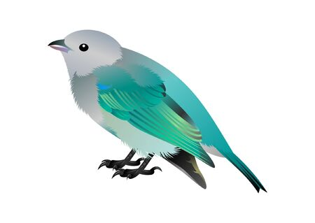 white, grey and blue bird