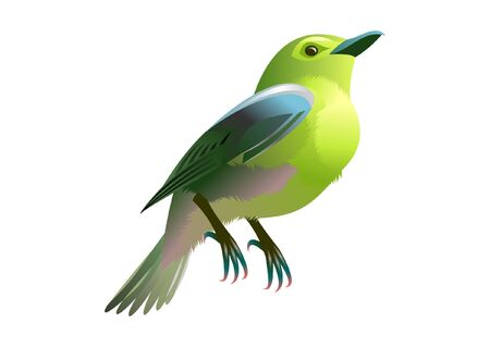 green and yellow bird Vector