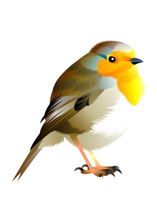 brown, yellow and white bird