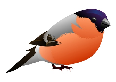 black white and orange bird Vector