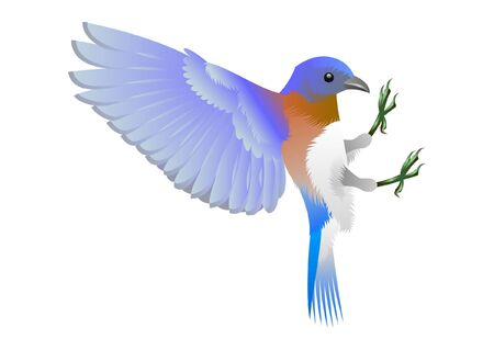 blue and white bird Vector