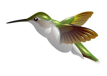 happiness concept: humming bird