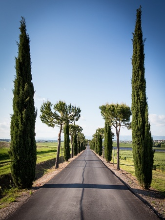 Cypress Lined Avenue with Road leading to Distance in Tuscany photo