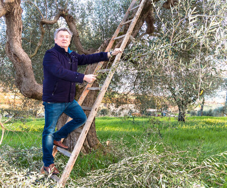 Man pruning olive tree in Italy at sping time photo