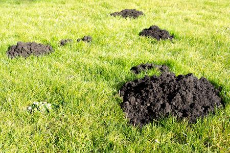 mole: Mole hills Stock Photo