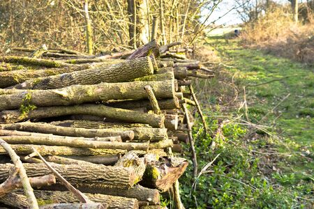 woodpile: Coppiced wood stacked in woodpile