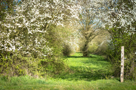 English byway in springtime with blossom