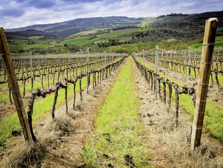 Vineyard in spring with diminishing point of view