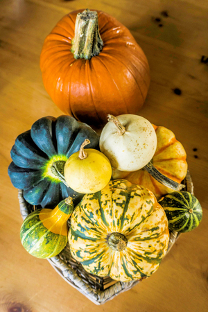 Pumpkin and Gourd