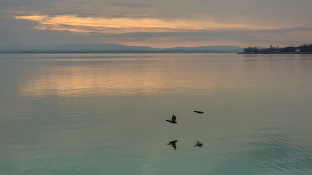 Two burds flying lkow over a lake