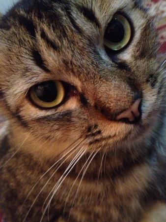 otganimalpets01: Cute confused black cat
