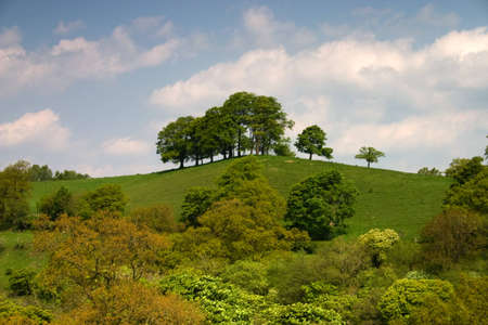Summer landscape with trees Stock Photo