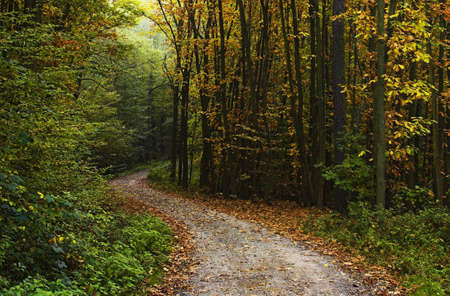 Forest pathway in the fall photo