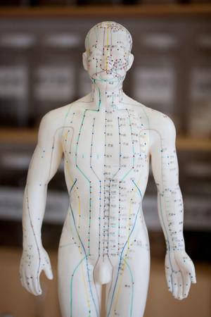 acupuntura china: Modelo de la acupuntura Mujer Foto de archivo