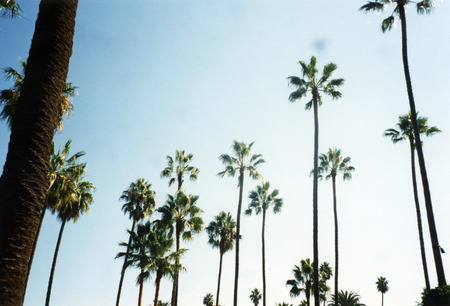 Palm Trees of Beverly Hills Imagens