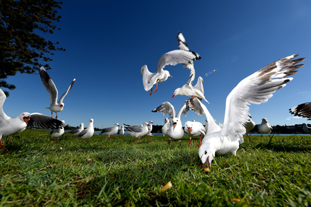 seagulls eating food on a sunny day Stock Photo