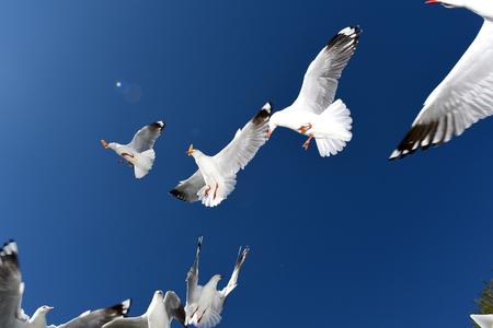 Seagulls flying against a blue sky