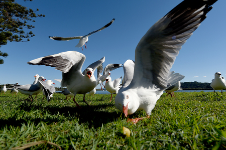 seagulls eating food on a sunny day Banco de Imagens