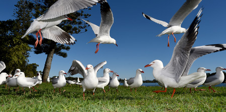 Seagulls flying against a blue sky